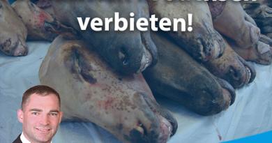 Kurse für blutiges Schächten in Sachsen verbieten!