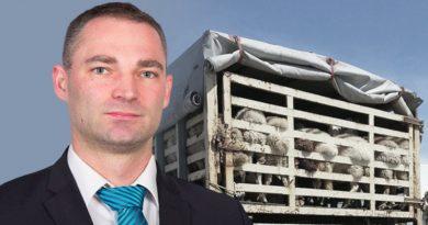 Hitzewelle Sachsen – Tiertransporte über 200 Kilometer sollten ausgesetzt werden!