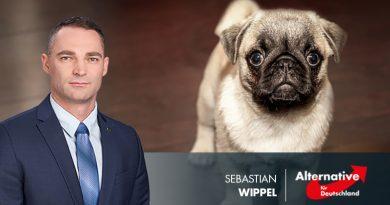 Brauchen wir einen Hundeführerschein?