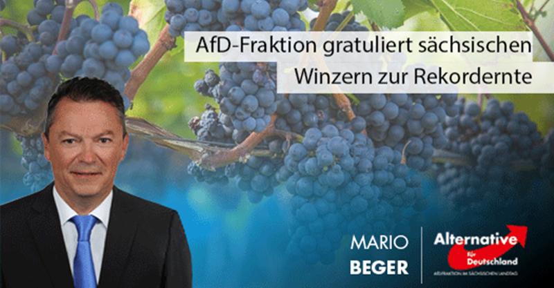 AfD-Fraktion gratuliert sächsischen Winzern zur Rekordernte