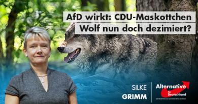 AfD wirkt: CDU-Maskottchen Wolf nun doch dezimiert?