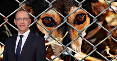 AfD fordert mehr Geld für Tierheime in Sachsen