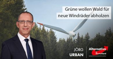 Grüne wollen Wald für neue Windräder abholzen