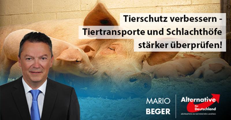Tierschutz verbessern - Tiertransporte und Schlachthöfe stärker überprüfen!