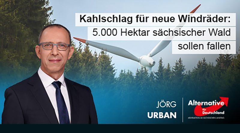 Kahlschlag für neue Windräder: 5.000 Hektar sächsischer Wald sollen fallen