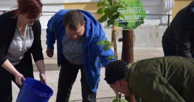 Taten statt grüner Worte: AfD pflanzte Bäume vor Landtag in Magdeburg
