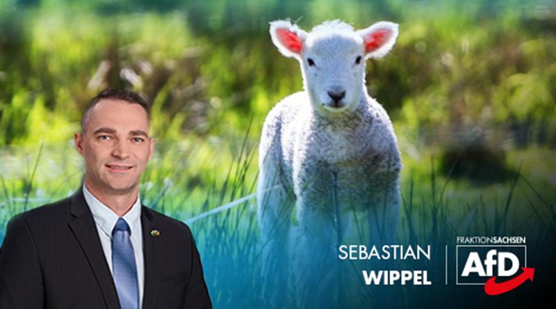 Tierschutzpolitischer Sprecher der AfD, Wippel: Grausames Schächten endlich untersagen!