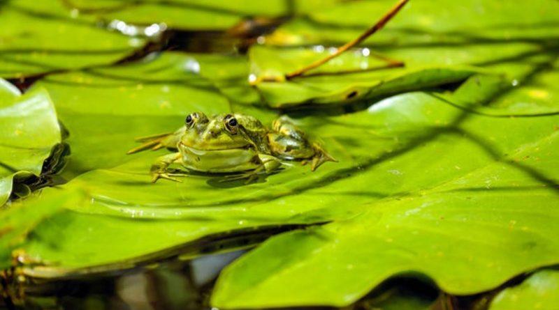 Umweltschutz beginnt mit Reinhaltung der Gewässer, CDU hat dafür keine Zeit