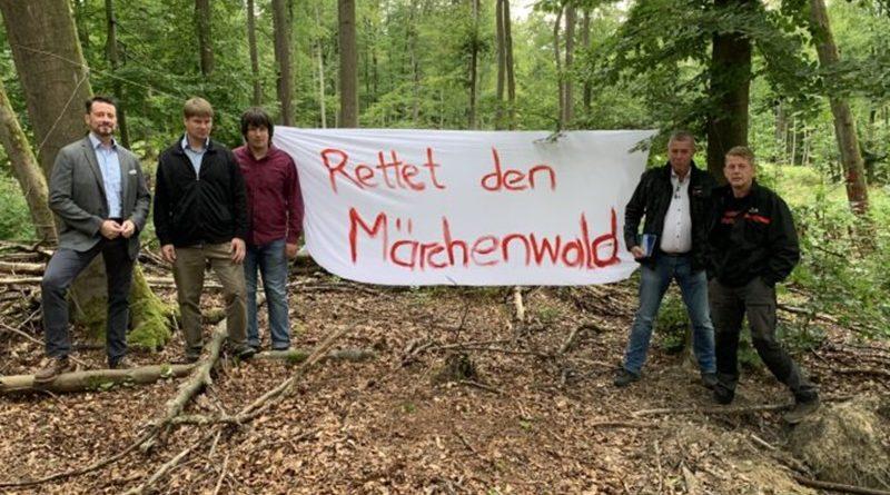 AfD will Abholzung des Brüder-Grimm-Waldes verhindern